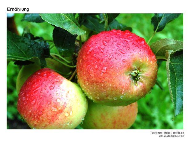 Bildkarte Apfel
