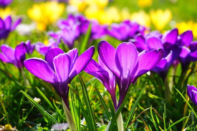 Frühling – Unterrichtseinheit Materialien