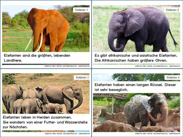 Elefant Infokarten 1 bis 4