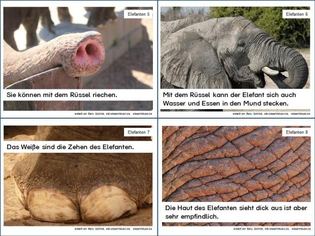 Elefant Infokarten 5 bis 8