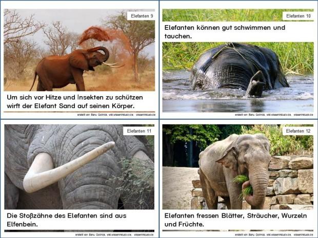 Elefant Infokarten 9 bis 12