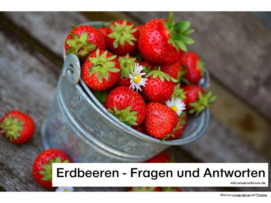 Erdbeeren - Fragen und Antworten, Körbchen mit Früchten