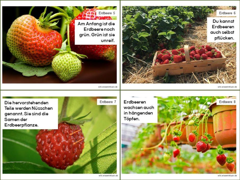 Erdbeeren Material Lesekartei