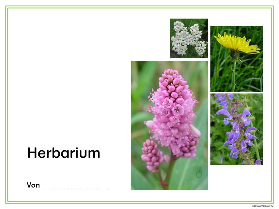 Herbarium – Deckblatt Vorschläge