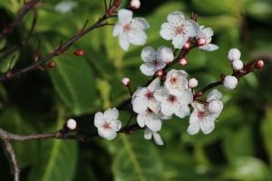 Herbarium anlegen - Anleitung ausführlich
