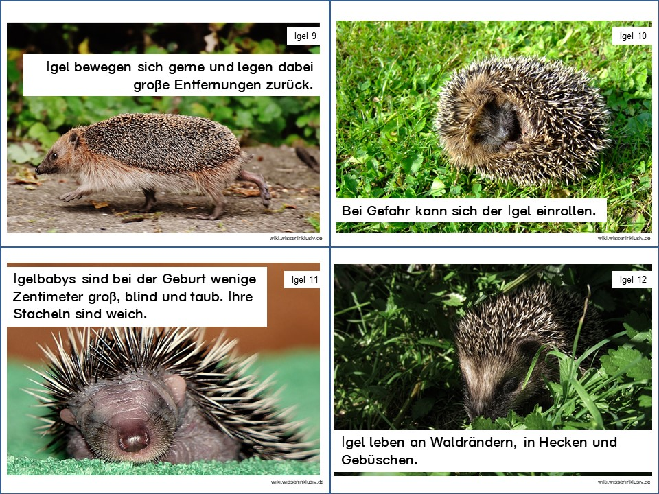 Igel Lesekartei Materialien Grundschule Wikiwisseninklusivde