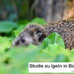 Igel in Bayern - Studie