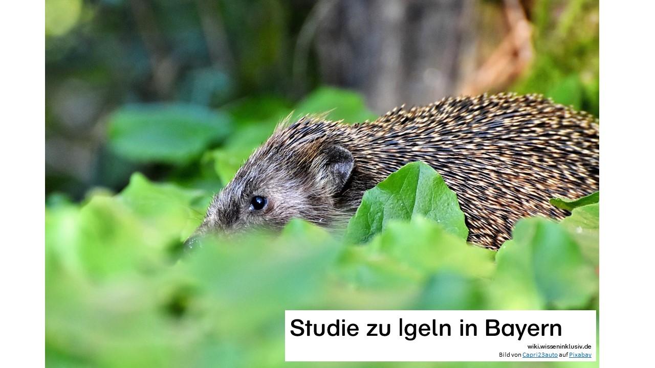 Igel in Bayern – Studie