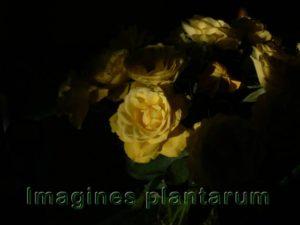 Wiesenpflanzen - Bilder