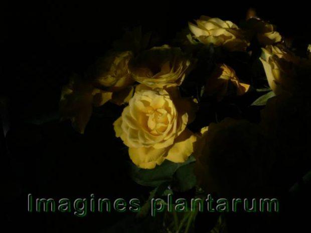 Wiesenpflanzen – Bilder