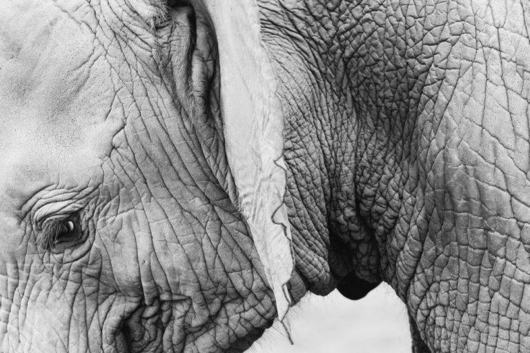 Jay Mantri – Kostenlose Fotos