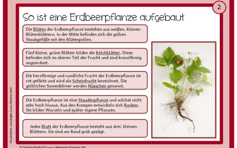 Materialien Grundschule, wiki.wisseninklusiv.de • Seite 4 von 8 ...