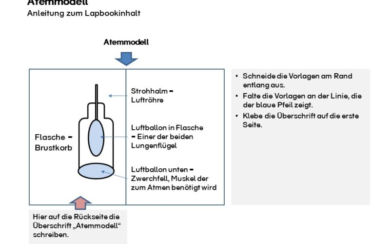 Lapbook Vorlage Luft Atemmodell