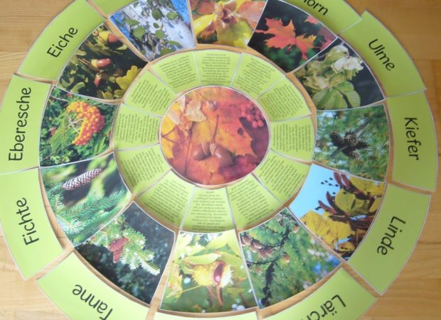 Laub- und Nadelbäume – Legekreis