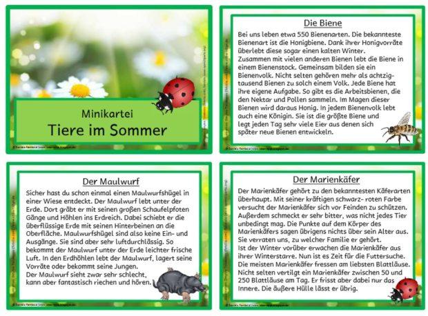 Tiere im Sommer – Minikartei