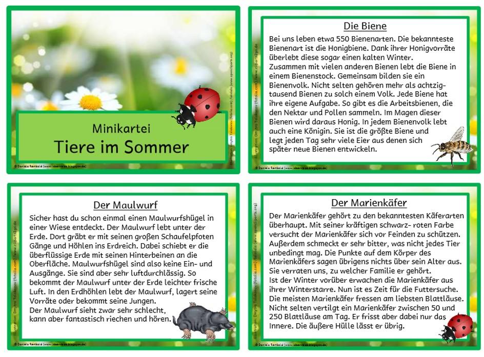 tiere im sommer minikartei materialien grundschule