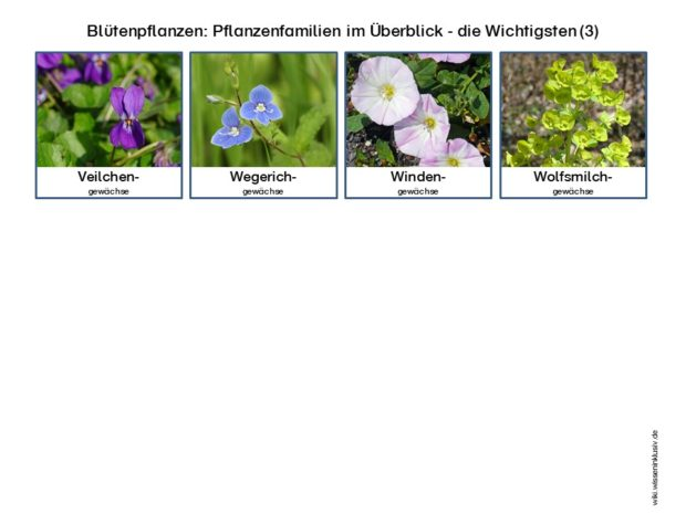 pflanzenfamilien-bluetenpflanzen-im-ueberblick-wichtigsten-3