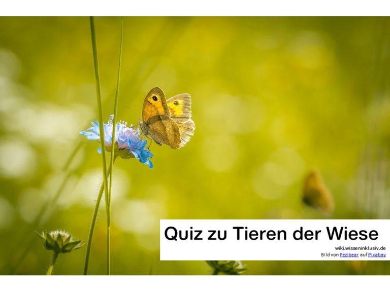 Quiz: Tiere auf der Wiese