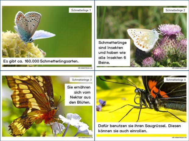 Wissenskarten zu Schmetterlingen, Karteikarten 1 bis 4