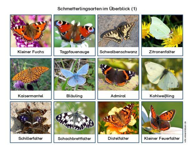 Schmetterlingsarten Überblick