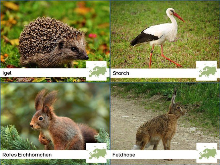 Tiere nach Kontinenten