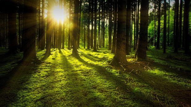 Entdecke den Wald – kleine Waldfibel