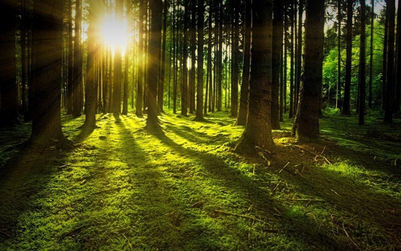 Waldbäume Sonne Moos