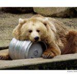 Wort-Bild-Karten Tiere - umfangreich und detailliert