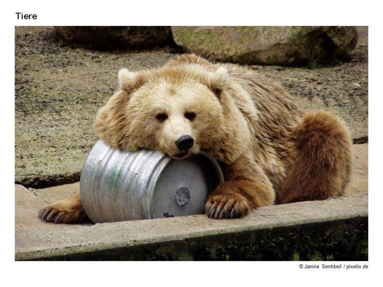 Wort-Bild-Karten Tiere – umfangreich und detailliert